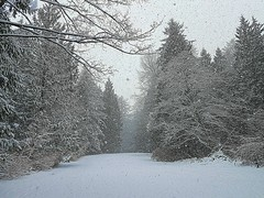 Snow falling (walneylad) Tags: eastviewpark westlynn lynnvalley northvancouver britishcolumbia canada snow snowstorm snowflakes february winter cold white park parkland forest urbanforest woods woodland trees branches logs green brown nature view scenery