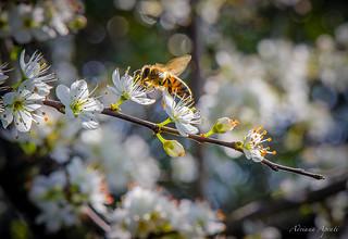 21 febbraio 2016, api al lavoro