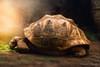 Turtle eating (George Nevrela) Tags: turtle cave animal giantturtle riesenschildkröte schildkröte digitalpainting nevrela georgenevrela