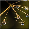Natures Orrery (Mark Wasteney) Tags: drops waterdrops refraction plant winter squareformat