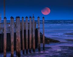 Super Blood Blue FULL MOON (Dapixara) Tags: orleansma orleans sunrise beach newengland bluemoon moon bloodmoon supermoon fullmoon rockharbor dapixara photography capecod massachusetts usa