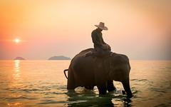 Elephant ride during sunset (Jose Miguel Moya) Tags: animals wildlife elephants sunsets islands sea red sunshine sun twilight travel tourist destination amazing explore adventure outdoors