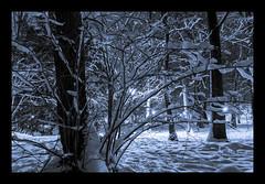 Lumières (Daniel_Hache) Tags: fresnes hiver winter february fevrier night nuit parc canon eos 550d sigma 1770