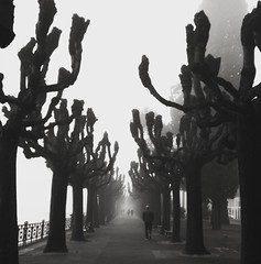 #blackandwhite #bnw #igersbnw #bnwigers #blackandwhiteonly #fog #nebbia #lake #lugano #cloudy #igers #instagramer #instalike #instadaily #picoftheday #pictureoftheday #tree #trees #winter #january #30jan #01302018 #giornidellamerla #streetphotography #igs (Luce_85) Tags: blackandwhite igersbnw bnwigers instalike lugano instagramer january instafollow trees followforfollow blackandwhiteonly instadaily huawei igers picoftheday igstreet streetphotography lake cloudy bnw fog pictureoftheday nebbia tree giornidellamerla 30jan 01302018 winter