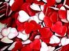 14_febbraio (lucy PA) Tags: cuori 14 febbario texture rosso innamorati amore february red hearts love