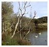 Lagoa de Mera 2. Mera Lagoon 2. (Esetoscano) Tags: laguna lagoon árboles trees aver birds aterdecer sunset paisaje landscape calma calm mera acoruña galiza galicia españa spain