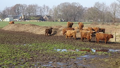 Klompenpad-Norderpad (Cor D.) Tags: klompenpad norderpad putten nederland netherlands gelderland