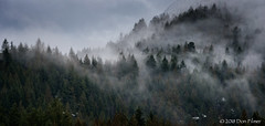 Clouds in the trees (Don Filmer) Tags: winter trees clouds on1 canada britishcolumbia pittlake places