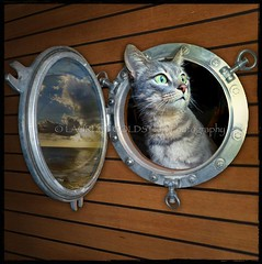 The Love Boat (designldg) Tags: cat catmodel cruise boat pothole sea ocean animal catlove fun travel leisure photography ©laurentgoldstein cute artisticexpression expression square whiskas feline moment capture panasonicdmcfz200 photo focus emotion greeneyes beauty candid petphotography animalphotography