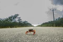 posando (Maruja Monk) Tags: life vida picture blanco cuba cangrejo canon