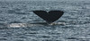 IMG_1955-1 (Andre56154) Tags: spanien spain espana andalusien andalusia meer ozean ocean wasser water wal whale tier animal flosse fin
