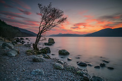 Lone Tree Sunset. (Gordie Broon.) Tags: lochness thegreatglen glenalbyn sunset dores lonetree scotland schottland rocks longexposure haida10stopfilter silhouette szkocja caledonia ecosse escocia beach collines hills colinas meallfuarmhonaidh nessie inverfarigaig scenery scozia alba drumbay scenic scottishhighlands gordiebroonphotography local invernessshire foyers lago lac see atardecer sonnenuntergang lecoucherdusoleil jezero february 2018 paysage paisaje hugeln sonya7rmkii ilce7rm2 sonyzeiss1635f4lens glen mhor bigloch geotagged