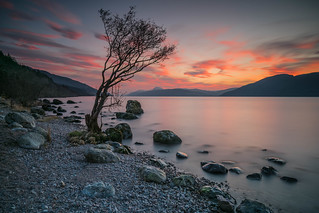 Lone Tree Sunset.