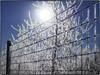 _1160191 (geelog) Tags: alberta bluesky bowriver calgary fence fishcreekprovincialpark frost lafargemeadows sun winter ab canada
