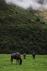 IMG_3493 (noemislee) Tags: peru cusco december 2017 travel trip noemislee noemí slee noemi tatiana vanessa ximena sánchez mendoza nature green grass naturaleza landscape paisaje montaña mountain humantay trekking hiking senderismo fog niebla horse horses caballo