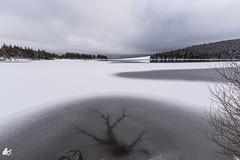 L'éclair glacé (Ben Mouleyre Photographie) Tags: auvergne auvergnerhônealpes puydedôme lac lacservières glace neige massifdusancy volcans hiver