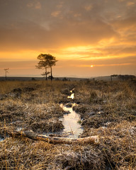 Woodbury Common (Quite Brazen) Tags: sunrise frost ice lumix g7 micro four thirds