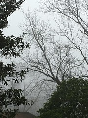 Foggy Morning In Georgia USA (Jack4Phil) Tags: