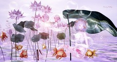 """All that we see or seem is but a dream within a dream."" - Edgar A. Poe (kimmyridley) Tags: viena lwposes zibska xxx blushevent d23 secondlife nani rare gacha thearcade luanesmagicalworld events pinklips magicalmystery whimsical goldfish magic lotus fishbowl"