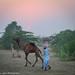 India, Pushkar Rajasthan, Camel Fair