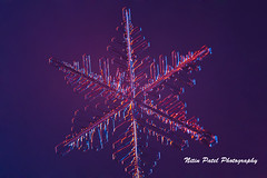 IMG_3010 (nitinpatel2) Tags: snowflakes winter snow macro crystal nature nitinpatel