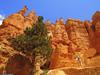 20160821_16 Hiker in Bryce Canyon, Utah (ratexla) Tags: ratexla'sgreentortoisetrip2016 ratexlascanyonsofthewesttrip2016 greentortoise canyonsofthewest 21aug2016 2016 canonpowershotsx50hs bryce brycecanyon utah usa theus unitedstates theunitedstates america northamerica nordamerika earth tellus photophotospicturepicturesimageimagesfotofotonbildbilder wanderlust travel travelling traveling journey vacation holiday semester resaresor ontheroad hiking hike sommar summer beautiful nature landscape scenery scenic sandstone mountain mountains berg canyon canyons orange hoodoo hoodoos trail trails