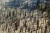 Tobacco Bay (quiggyt4) Tags: bermuda tobaccobay caribbean beach beaches water turquoise stop stopsign signage roadsign rocks boulder shoreline bay stgeorges fort fortstcatherine trafficsign boat boating atlantic atlanticocean coral fish ocean british britain greatbritain territory brexit england uk unitedkingdom occupy ows occupywallstreet ronpaul trump donaldtrump horseshoebay southampton cave cavern stalactite stalagmite halactite geology lake reflection underground dark telephone townhall kelp seaweed
