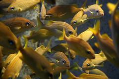 Aquarium Walk, Atlantis Resort, Nassau, 2005 (Tom Powell) Tags: atlantis bahamas canoneos20d availablelight 2005 nassau