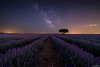 Lavanda way (Andrés Domínguez Rituerto) Tags: españa spain lavanda lavender víaláctea milkyway estrellas stars naturaleza nature landscape paisaje noche night nocturna nocturne sky brihuega