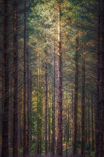 Fernworthy Forest [In Explore 1/3/2018]