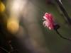 Chasing the light (Tomo M) Tags: plum nature light winter bokeh tokyo pentacon