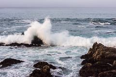 2018-Jan-California-1046 (4x4Foto) Tags: 2018 bigsur california deetjensrestaurant emeraldbay january montereybay pacificcoasthighway pacificgrove pacificocean southlaketahoe flowers ocean plants rocks sunset sunshine surf surfing travel trees waves virginia unitedstates