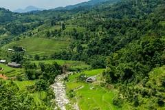 Výlet na motorce do Hoang Su Phi (zcesty) Tags: řeka vietnam22 terasa rýže pole krajina vietnam dosvěta hàgiang vn