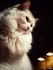 James (J.C. Moyer) Tags: james jamestheragdoll ragdollcat cat redcat lamp blackbackground whiskers iconic pet cute rustic motorolamotog4plus evening colour color friend tablelamp