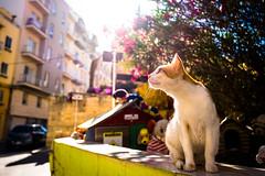 thrivers on islands #119 (Cat Village, St. Julians, Malta) (Marser) Tags: xt10 fuji raw lightroom malta stjulians catvillage cat townscape sunlight マルタ セントジュリアンズ 猫 貓