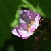 rose in sunlight