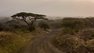One morning in Kenya