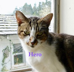 Wiki is my Hero (Room With A View) Tags: wiki cat hero odc