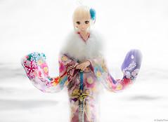 DSC07431-Edit (zephythor) Tags: dollfiedream doll volks bjd