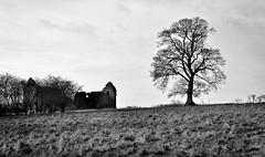 Derelict barn (johncheckley) Tags: d90 tree barn field