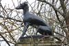 IMG_3535 (Jeff And) Tags: salisbury wiltshire hound dog sculpture gates gateposts malmsburyhouse