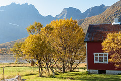 Favorable Situation (Dani℮l) Tags: redcabin norway lofoten flakstad danielbosma landscape light sunlight tree autumn mountain fjord europe beautiful water calm weather holiday tourism