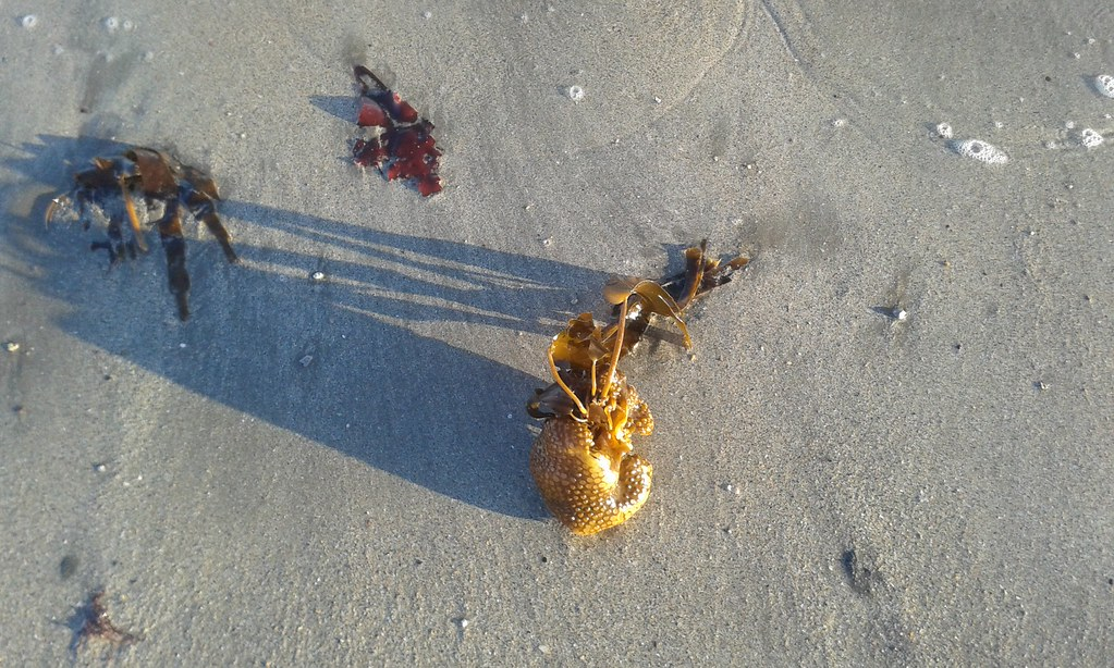 Clonea Beach, November