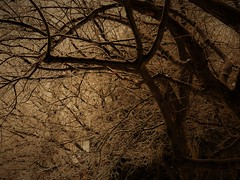 Frosty tree (Espykrelle) Tags: sepia 7dwf tree frosty arbre glace nature winter hiver theme explore exploration