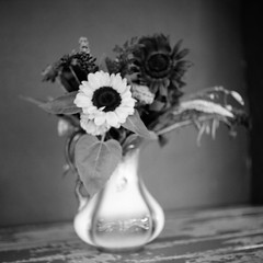 Soft (colinpoe) Tags: 80mm blackandwhite kodakfilm mediumformat 6x6 c330f impressionism c330 flowers tlr mamiyac330f stilllife softfocus unfocussed bw tmax100 mamiyasekor80mm 120