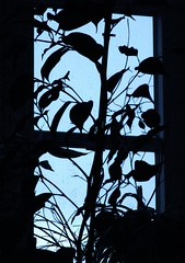IMG_9600 Silhouette am Fenster (Traud) Tags: germany deutschland bayern bavaria window fenster plant pflanze silhouette