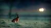 Take care of the lights, rabbit (Prismensucher) Tags: hase rabbit mood morning stimmung verkehr strase auto licht scheinwerfer wiese