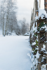Roundpole fence in the snow (Ivan Mæland) Tags: tree forest snow wood leafs plant fence ivy poison