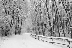 Chemin sous la neige -**--+°--°° (Titole) Tags: snow fence trees titole nicolefaton trévoix thechallengefactory 15challengeswinner challengegamewinner gamewinner