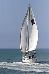 IMG_2096_sailing away. (lada/photo) Tags: sailing sailboats florida sea water salils ladaphoto